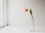Single orange tulip in glass bottle on white table next to window and against painted brick wall background (with matte effect)