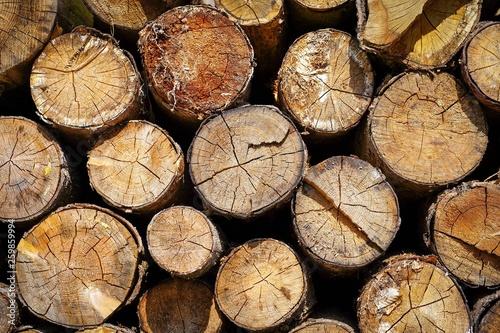 Holzstoß im Frühling © Martin