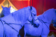 Leinwandbild Motiv circus horses on black background