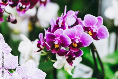 Orchidée - 259895507