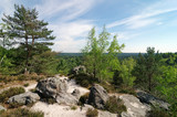 Fototapeta Fototapety z naturą - Hills and rocks in Fontainebleau forest © hassan bensliman