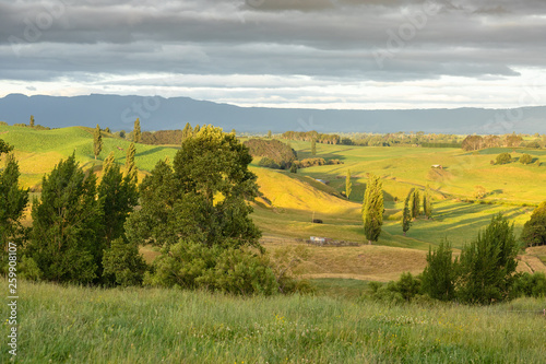 canvas print picture typical rural landscape in New Zealand