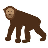 chimpanzee flat illustration on white