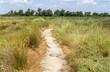 canvas print picture - Regional Nature Park of the Camargue