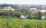 view of Pezinok town in Slovakia