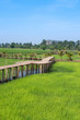 Vintage wooden bridge in the rice field at the countryside - 259989154