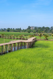 Vintage wooden bridge in the rice field at the countryside