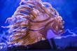 Leinwandbild Motiv Sea Anemone