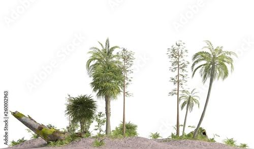 Leinwandbild Motiv Trees of the mesozoic era isolated on white background 3D illustration