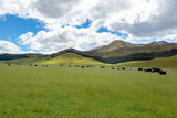 Fototapeta Fototapety na sufit - Landscape scenery in south New Zealand © magann