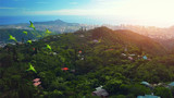 Flock of parrots fly over the green tropical forest with city of Honolulu on the background. The island of Oahu, Hawaii