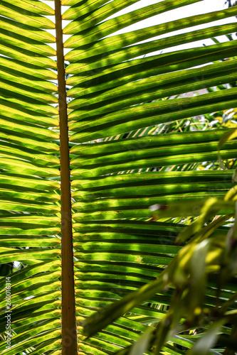 Close up palm branch