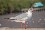 Seagull standing on a concrete with the sea background.