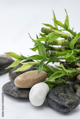 bamboo with stone - 260166175