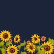 Sunflower pattern - 260168948