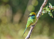 canvas print picture - Green bee-eater