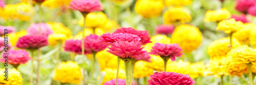 canvas print picture bright yellow and red flowers of the monarda