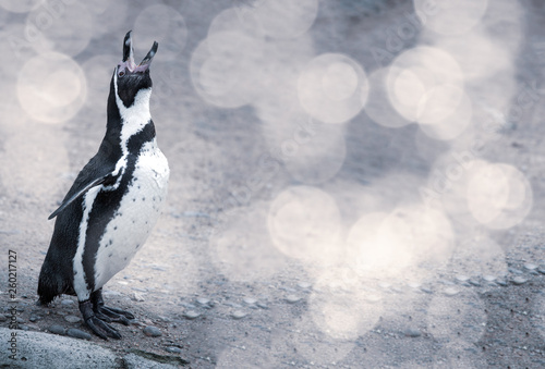 Fototapeten Pinguine Penguin with bokeh and space to the side