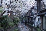 Cherry Blossom Trees along a canal in Gion area in the evening in Kyoto