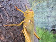 Colorful grasshopper isolated in tree