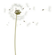 background with dandelions, vector, illustration