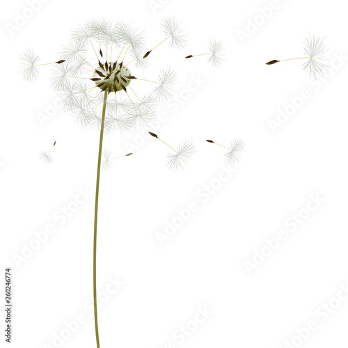 background with dandelions, vector, illustration - 260246774