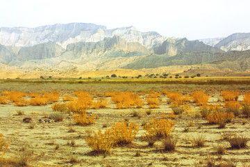 Dry plants in the savannah. Sand. The mountains. drought. heat. Travel