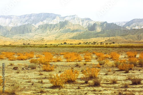 Dry plants in the savannah. Sand. The mountains. drought. heat. Travel © Amina