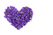 Heart shape flowers. Violets love symbol isolated on white background. Template for greeting card, web design