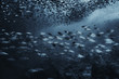 Leinwandbild Motiv black white fish group / underwater nature poster design