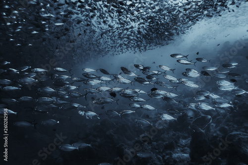 black white fish group / underwater nature poster design