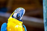 Portrait photography of a yellow and blue macaw. Captured in a forest near the Caribbean coast of Cartagena, Colombia.
