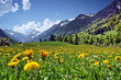 canvas print picture - Blumenwiese und Berge in den Alpen