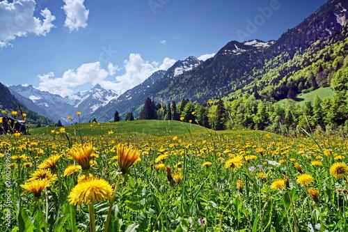 canvas print picture Blumenwiese und Berge in den Alpen