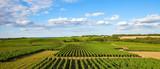 Panorama dans les vigne en Pays de la Loire