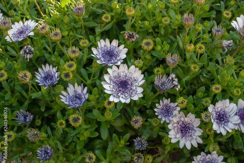 美しく咲く野花