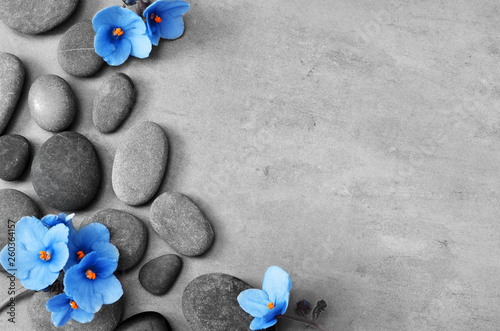Blue flower and stone zen spa on grey background - 260364157
