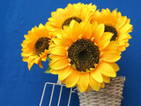 Sunflowers in front of blue background