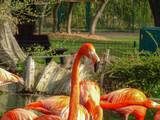 ZOO Animals Zoo Photography Zoo Dresden Wild Animales