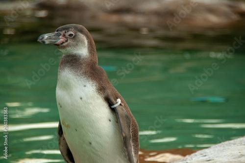 Fototapeten Pinguine Zoo Dresden 2019 Tierbilder aus dem Zoo Dresden animalfocus