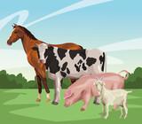 Fototapeta Fototapety z końmi - horse cow pig and goat © Jemastock