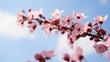 Quadro Kwitnące drzewa