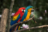 parrot on a perch in a zoo
