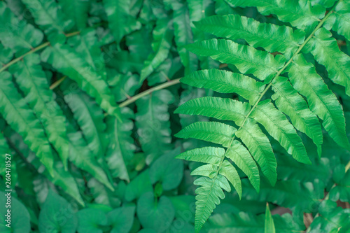 Many green leaves stacked in the outdoor garden.soft focus.