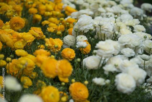 Leinwanddruck Bild blumenblüte