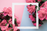 Pink flowers of azalea with white frame on pink and blue background. Toned image. Empty place for inspirational, emotional, sentimental text, quote or sayings.