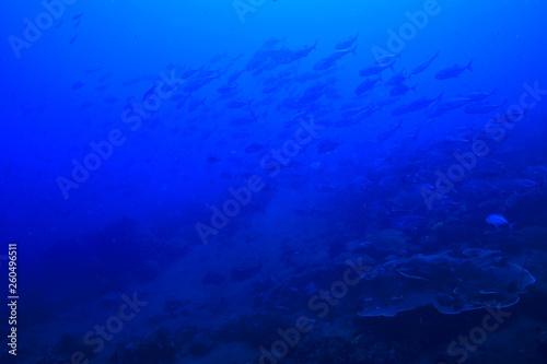 Leinwandbild Motiv underwater world / blue sea wilderness, world ocean, amazing underwater