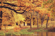 Quadro landscape forest sunny autumn day / yellow trees in the landscape Indian summer autumn October