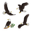 Set of bald eagles - vector illustration