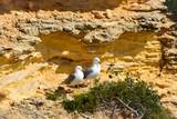 Möwen am Strand der Algarve in Portugal